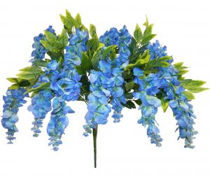 "Blue 39"" tall wisteria Bush x 15"