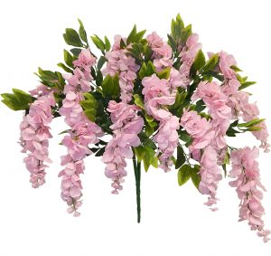 "Pink 39"" tall wisteria Bush x 15"