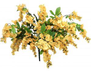 "Yellow 32"" tall wisteria Bush x 24"