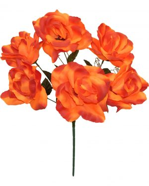 "Orange 17"" open rose Bush x 6"