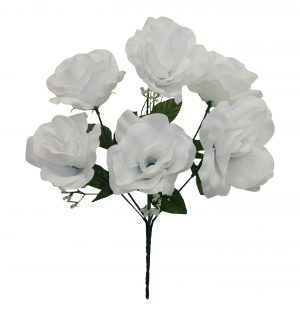 "White 13"" open rose Bush x 6"