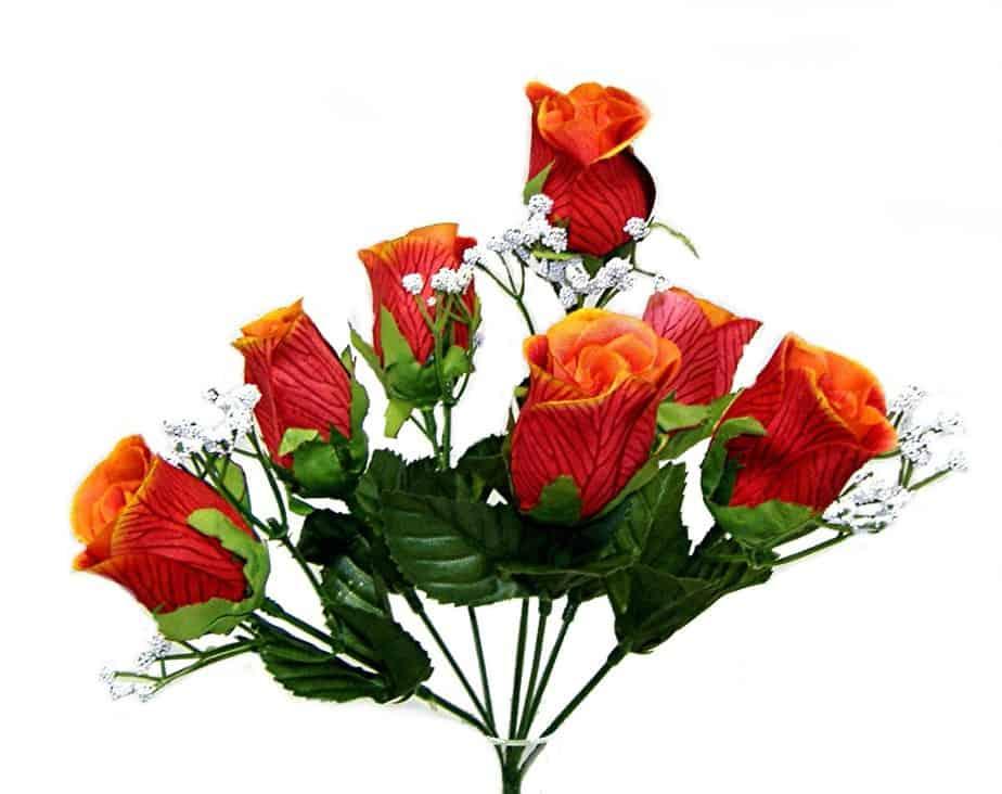 Flame M P Rose Bud Bush x 7