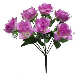 "Lavender 14"" tall M P open rose Bush x 7"