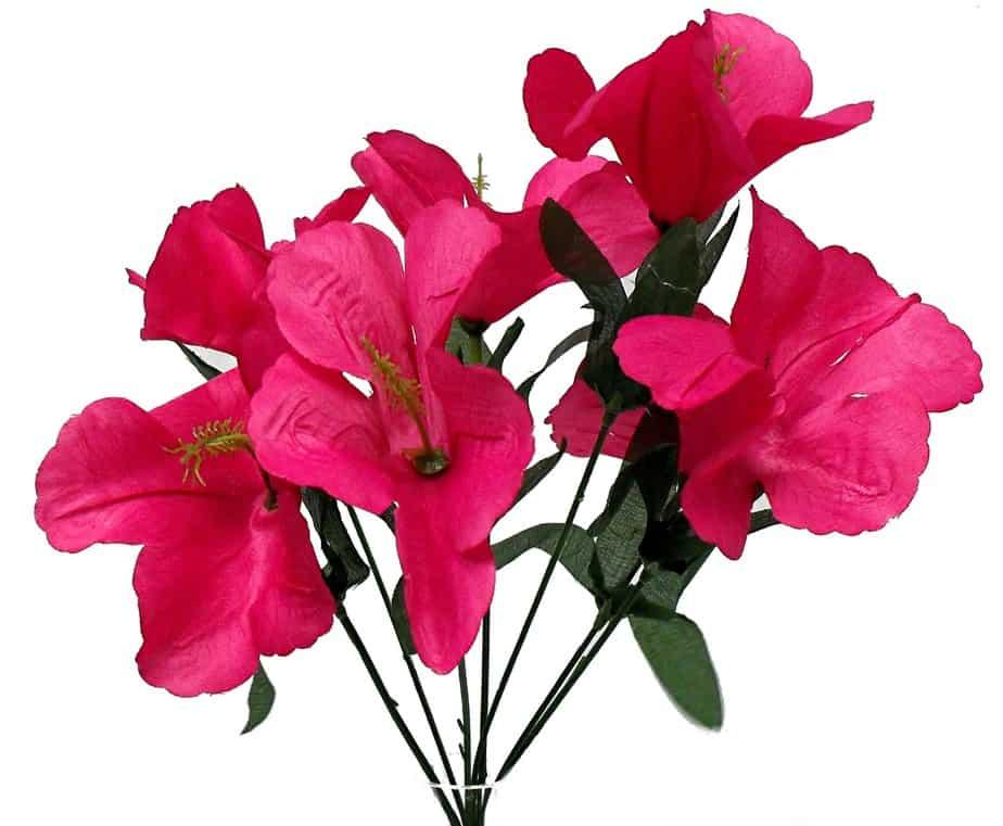 "Fuchsia 12"" tall hibiscus Bush x 7"