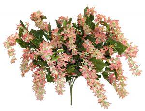 Brown Lilac Bush x 40