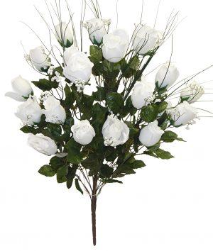 "White 27"" tall M P rose Bud Bush x 24"