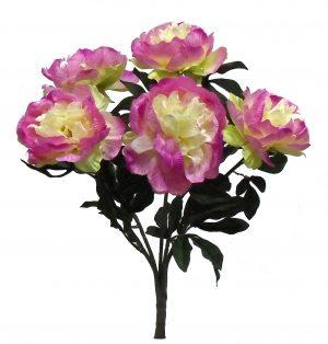 "Orchid 22"" tall peony Bush x 5"