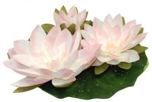 A set of 3 floating waterlily