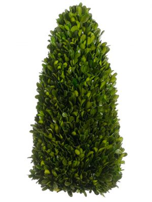 "13.7"" Preserved Boxwood Cone Topiary Green"