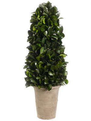 "20.8"" Preserved Tea Leaf Cone Topiary in Terra Cotta Pot Green"