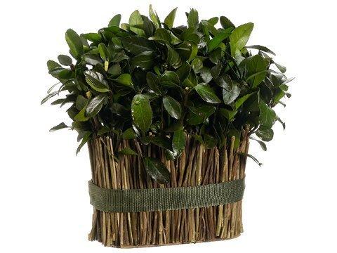 """11.5"""" Preserved Tea LeafStanding Twig Bundlew/Display Box Green"""