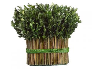 "11.4"" Preserved Boxwood Bundle Arrangement Green"