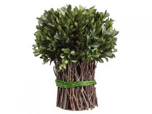 "10.2"" Preserved Boxwood Bundle Green"