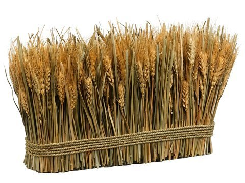 "9.8"" Preserved Wheat/Grass Standing Twig Natural"