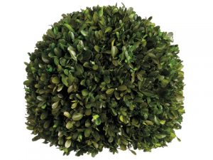 "12"" Preserved Boxwood Ball Green"