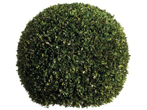 "23"" Preserved Boxwood Ball Green"