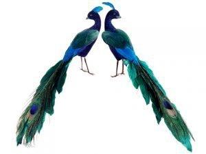 """11"""" Glittered Peacock(2 ea./set)Peacock"""
