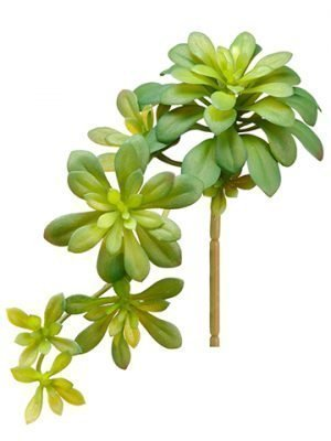 "11.8"" Soft Aeonium Pick Green"