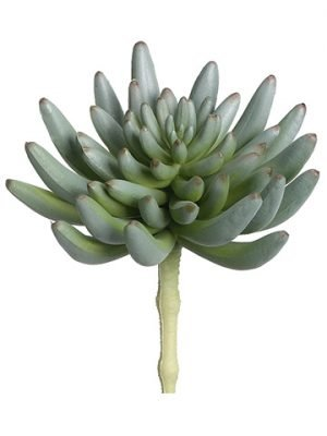 "6""H x 3.5""D Soft Plastic Spike Aeonium Pick Green Gray"
