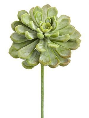"6"" Soft PE Baby Aeonium Pick Frosted Green"