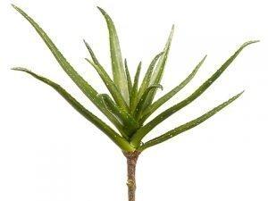 "20"" Aloe Plant Green"