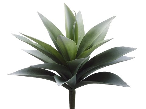 """11"""" Agave Plant with 19 Leaves Frosted Green"""