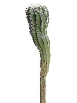 "8"" Cactus Green"