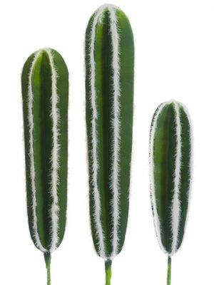 "13""-17.5"" Soft PeruvianCactus (3 Assorted/set)Green"