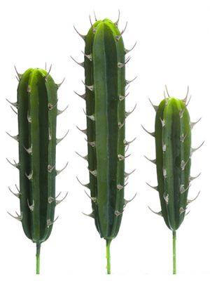 "12.5""-17.5"" Soft PeruvianCactus (3 Assoted/set)Green"