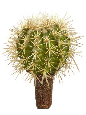 """7""""H x 3""""D Barrel Cactus Pick Green"""