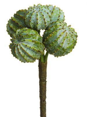 """6"""" Barrel Cactus Pick Green"""