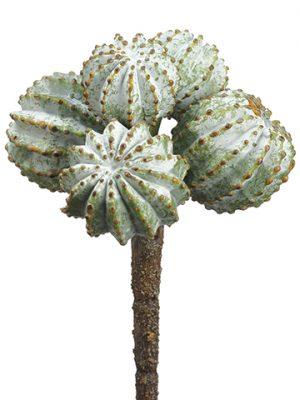 """6"""" Barrel Cactus Pick Green Gray"""