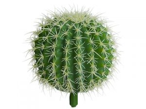 """6""""H x 5.5""""D Barrel Cactus Green"""