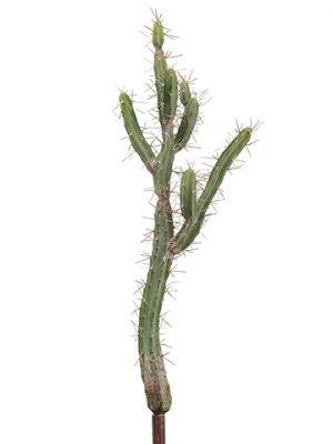 "37"" Peruvian Cactus Pick Green"