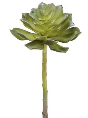 "8""H x 5""D Soft Echeveria Pick Green Gray"