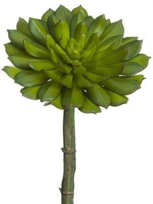 """9""""H x 6""""D Echeveria Pick Green"""