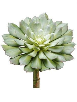 "9""H x 6""D Echeveria Pick Green Gray"
