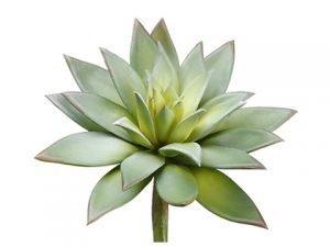 "9""H x 7""D Echeveria Pick Green Gray"