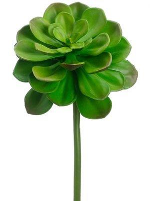 """14"""" Echeveria Green"""