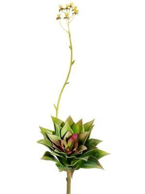 "18.5"" Flowering Echeveria Pick Green Burgundy"