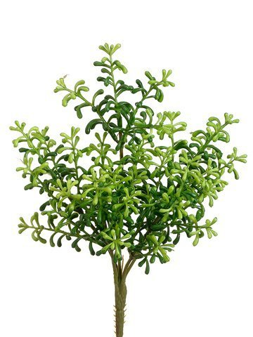 "10"" Sedum Bush Green"
