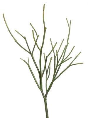 "23"" Pencil Cactus Plant Green"