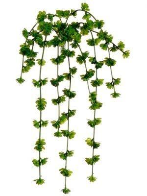 "20"" Sedum Vine x9 Green"