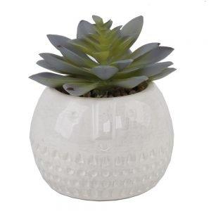 Succulent in Round Cool Face Ceramic