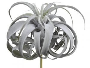 """12"""" Tillandsia Pick With 24LeavesGreen Gray"""