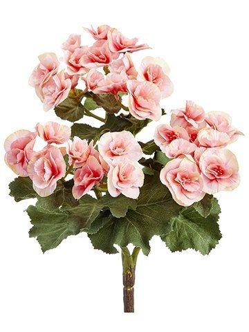 """10"""" Begonia Bush x3 Pink"""