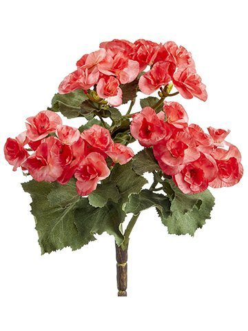 "10"" Begonia Bush x3 Watermelon"