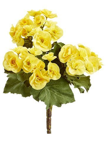 "10"" Begonia Bush x3 Yellow"