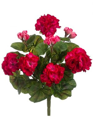 "13"" Geranium Bush x8 Beauty"