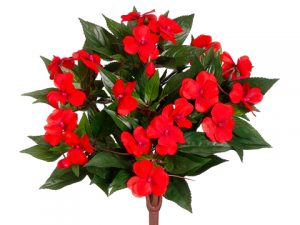"13.7"" New Guinea Impatiens Bush Tomato Red"